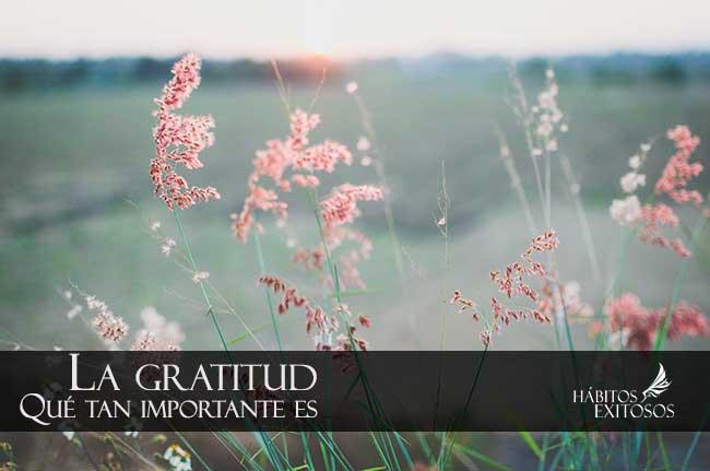 Ser agradecido - Hábitos Exitosos