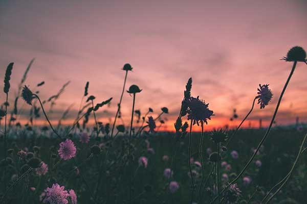 Hábitos para desarrollar una vida consciente - Hábitos Exitosos