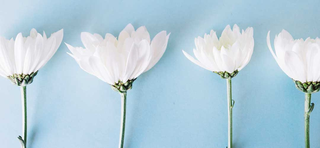 ¿Eres una persona altamente sensible? – 10 señales que te ayudan a confirmarlo